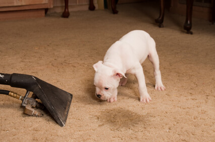 Carpet odor removal by K&D Carpet & Cleaning Services